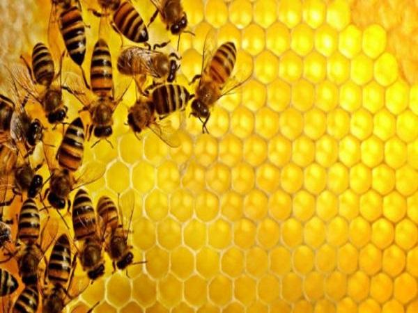 Mơ thấy tổ ong có ý nghĩa như thế nào