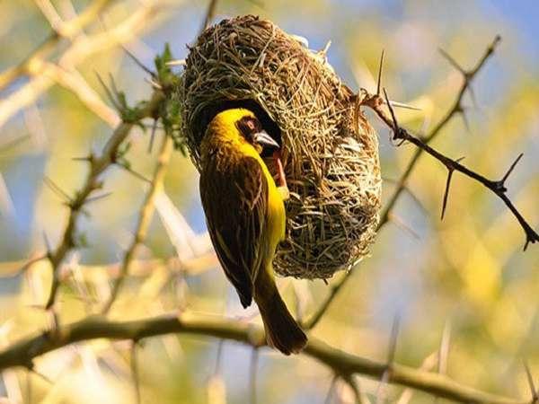 Giải mã giấc mơ thấy tổ chim là điềm lành hay dữ, đánh đề con gì?