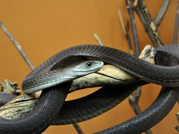 Mơ thấy rắn đen là điềm báo gì, ghi con lô nào chuẩn?