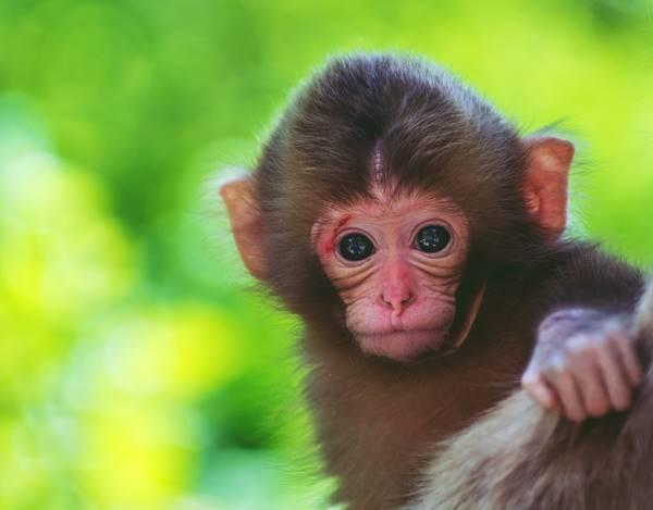 Giải mã bí ẩn giấc mơ thấy con khỉ là điềm báo gì? Đánh số mấy