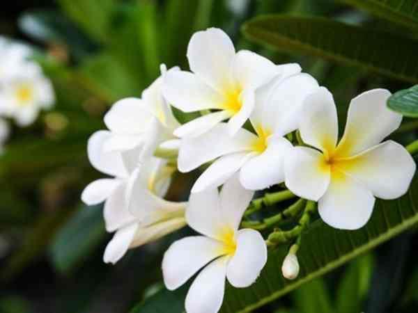 Ngủ mơ thấy hoa màu trắng đánh số đề con gì ?