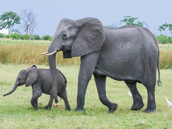Nằm mơ thấy voi đánh xổ số con gì có điềm báo gì may mắn