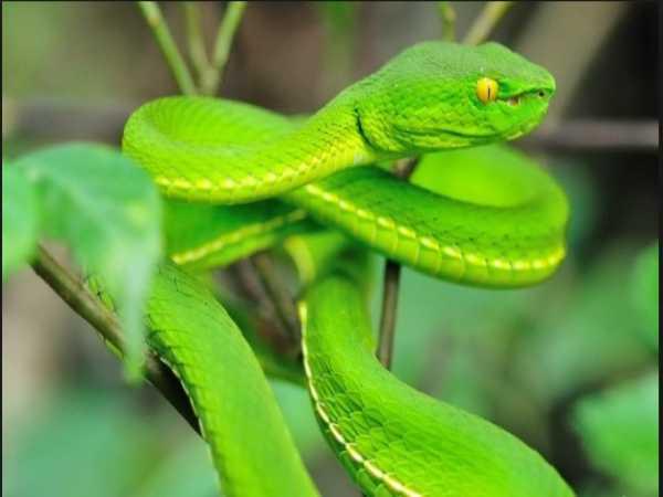 Ngủ mơ thấy rắn xanh đánh lô số mấy ? Mang ý nghĩa điềm báo gì ?